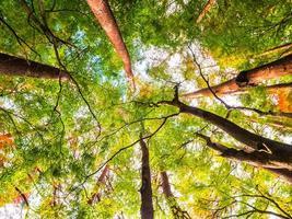 grandes árvores na floresta, vista de anjo baixo