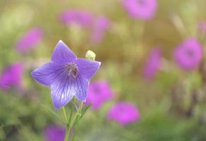 close-up de flor roxa com fundo desfocado