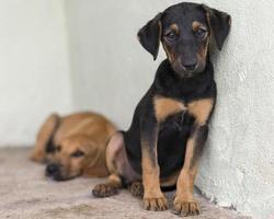cães fofos de resgate em um abrigo esperando para serem adotados foto