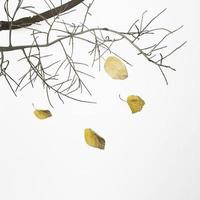 galho de árvore caído com folhas secas foto