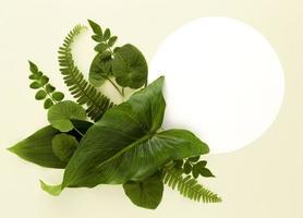 variedade de folhas planas foto
