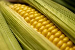close-up de composição de milho de alto ângulo