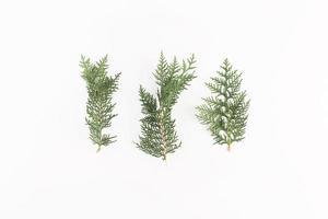 ramos coníferos isolados no fundo branco foto