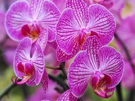 lindas flores de orquídea rosa foto