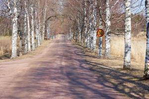 bétulas ao longo da estrada e um sinal de limite de velocidade de 30 quilômetros por hora. foto