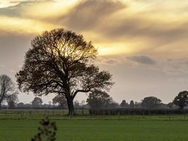 céu dramático com árvores nuas foto