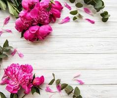 fundo com peônias rosa foto