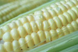 close-up de uma espiga de milho com gotas de água foto