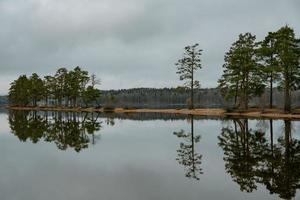 pinheiros com um pequeno lago foto