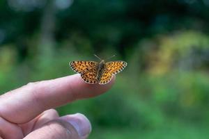 borboleta laranja em um dedo foto