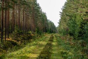 velha estrada coberta de mato em uma floresta foto