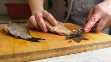 limpeza de peixes de água doce, abate de carpas com uma faca. foto