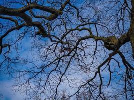 olhando para cima através de galhos de árvores nuas para um céu azul foto