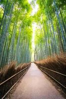 bosque de bambu em arashiyama, kyoto foto