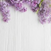 flores lilás de close-up em fundo branco foto