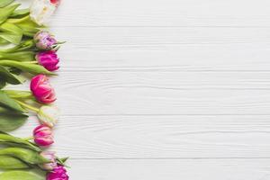 tulipas frescas em fundo branco foto