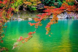 lindo rio arashiyama com árvore de bordo foto