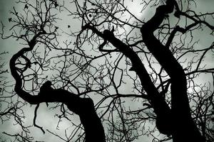vista dramática de uma árvore morta com fundo de nuvens de tempestade. foto