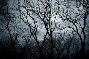 vista da floresta assustadora com fundo do céu dramático. foto