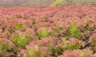 vegetais orgânicos na fazenda foto