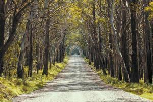 uma longa estrada de terra no parque nacional kanangra-boyd na austrália regional foto
