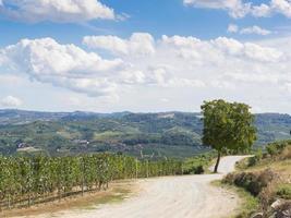 caminho rural em vinhedo foto