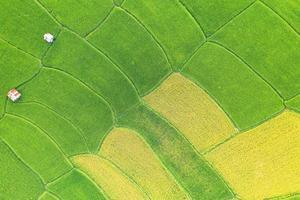 vista aérea do campo de arroz verde e amarelo foto