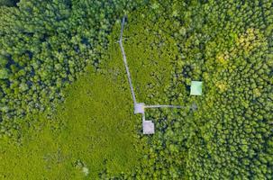 vista aérea superior da ponte de madeira do mangue foto