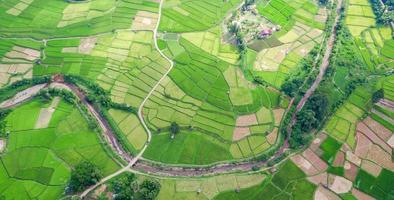 vista aérea da paisagem do campo de arroz verde foto