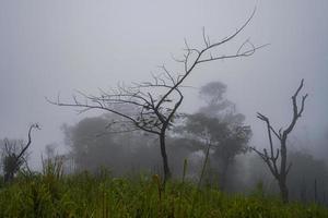 árvores na floresta enevoada pela manhã foto