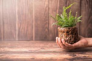 mão segurando um vaso de planta foto