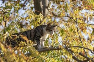 um lindo gato com olhos amarelos e nariz rosa em uma árvore foto