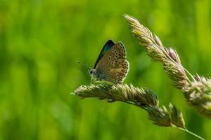 close-up de uma borboleta foto
