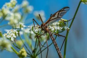 Grande guindaste voando em uma flor branca foto