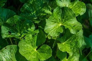 grandes folhas verdes foto