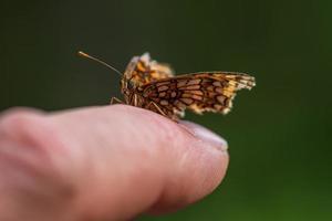 borboleta em um dedo foto