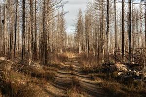 estrada de terra em uma floresta de inverno foto