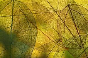 folhas verdes vibrantes de outono foto