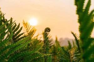 folhas de samambaia e sol da manhã foto