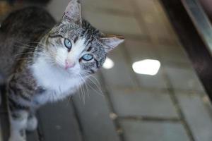 gata linda com olhos verdes foto