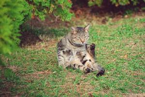 lindo gato listrado foto