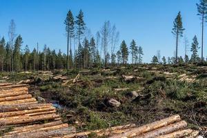 área de derrubada com madeira e galhos no solo foto