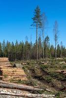 derrubar floresta com madeira e galhos no chão foto