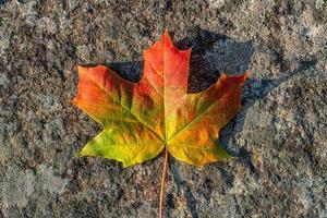 folha de bordo única sob a luz do sol e todas as cores do outono foto