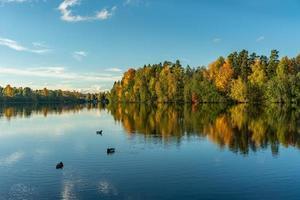 árvores coloridas de outono com patos na água foto