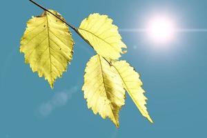 folhas amarelas de outono contra o céu e sol brilhante foto