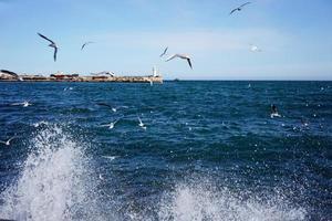 vista do mar com vista para o farol e as gaivotas. foto