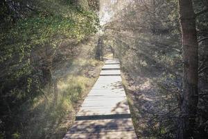 trilha de madeira na floresta na natureza foto