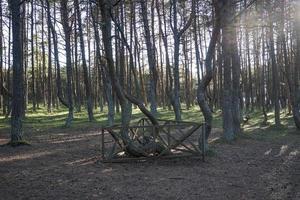 paisagem com floresta dançante no espeto da Curlândia foto