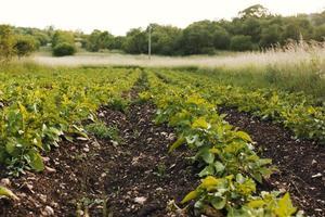 tiro longo do campo agrícola foto